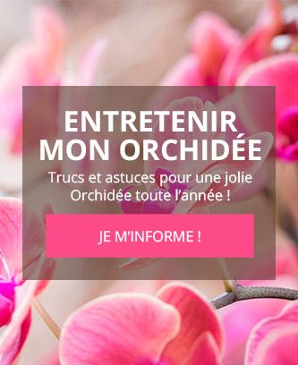 Entretenir mon orchidée