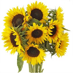 BOUQUET LONGUES TIGES TOURNESOL