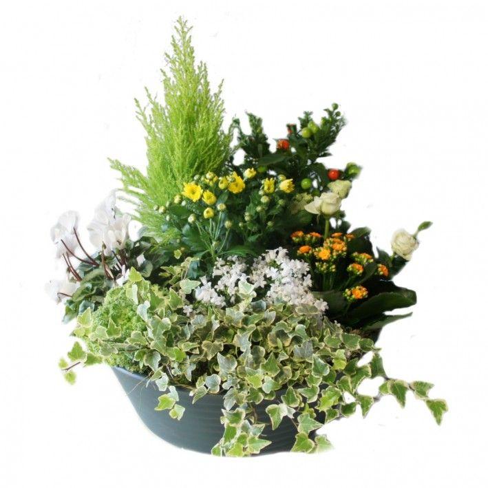 composition eternite deuil plantes deuil hibiscus fleurs. Black Bedroom Furniture Sets. Home Design Ideas