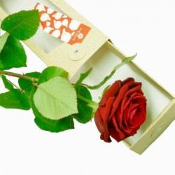 COFFRET ROSE RED NAOMIE