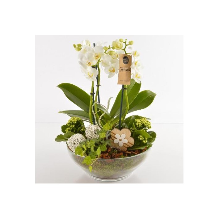 COMPOSITION ORCHIDEE