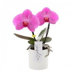 ORCHIDEE SINGOLO DOUBLE