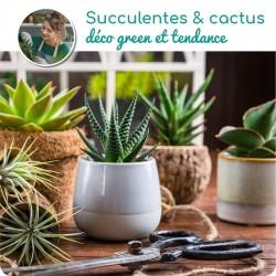 SUCCULENTES OU CACTUS + CACHE POT