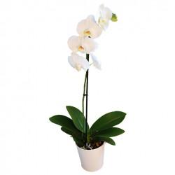 ORCHIDEE 1 TIGE HIBISCUS FLEURS