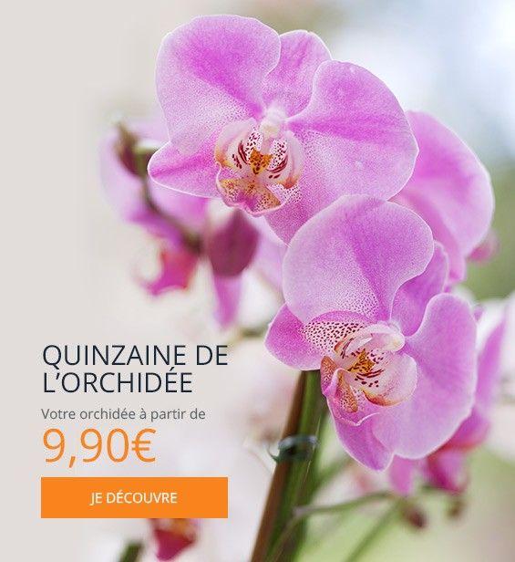 QUINZAINE DE L'ORCHIDEE HIBISCUS FLEURS NANTES