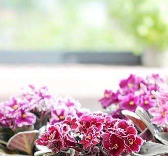 Vos plantes d'intérieur